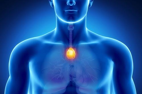 El timo, la glándula de la salud y la inmunidad