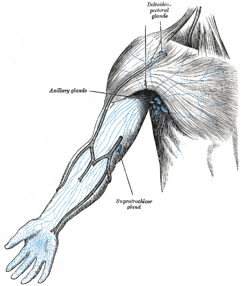 Sistema linfático_Equilibrio y defensa de nuestro organismo