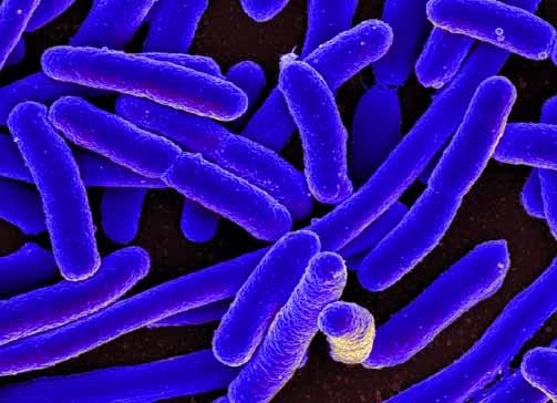 ¿Qué son los antígenos?