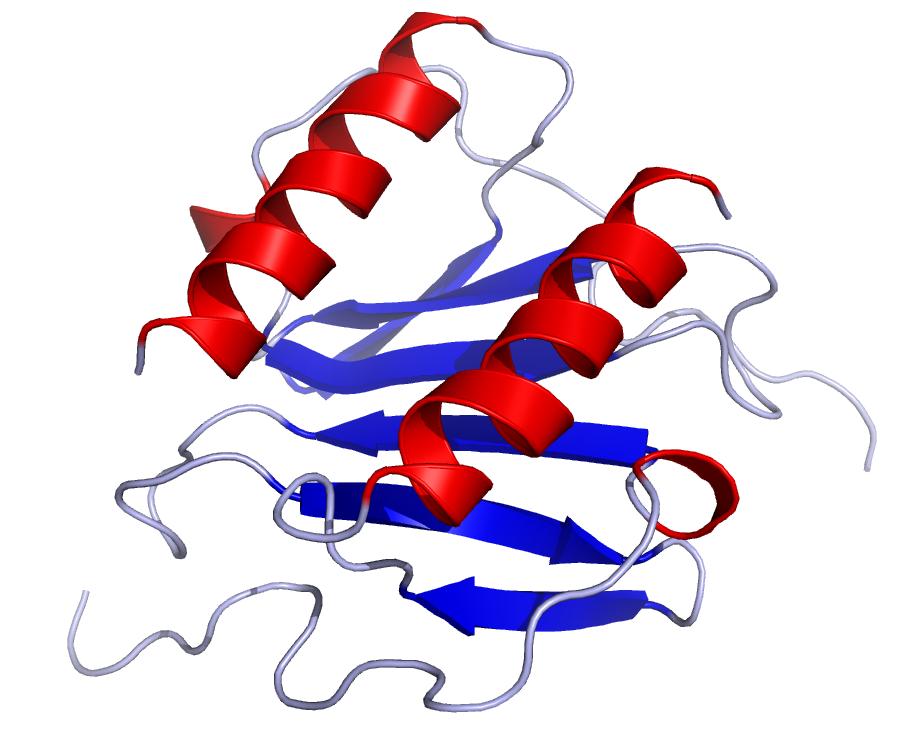El papel de la IL-8 en la respuesta inmunológica