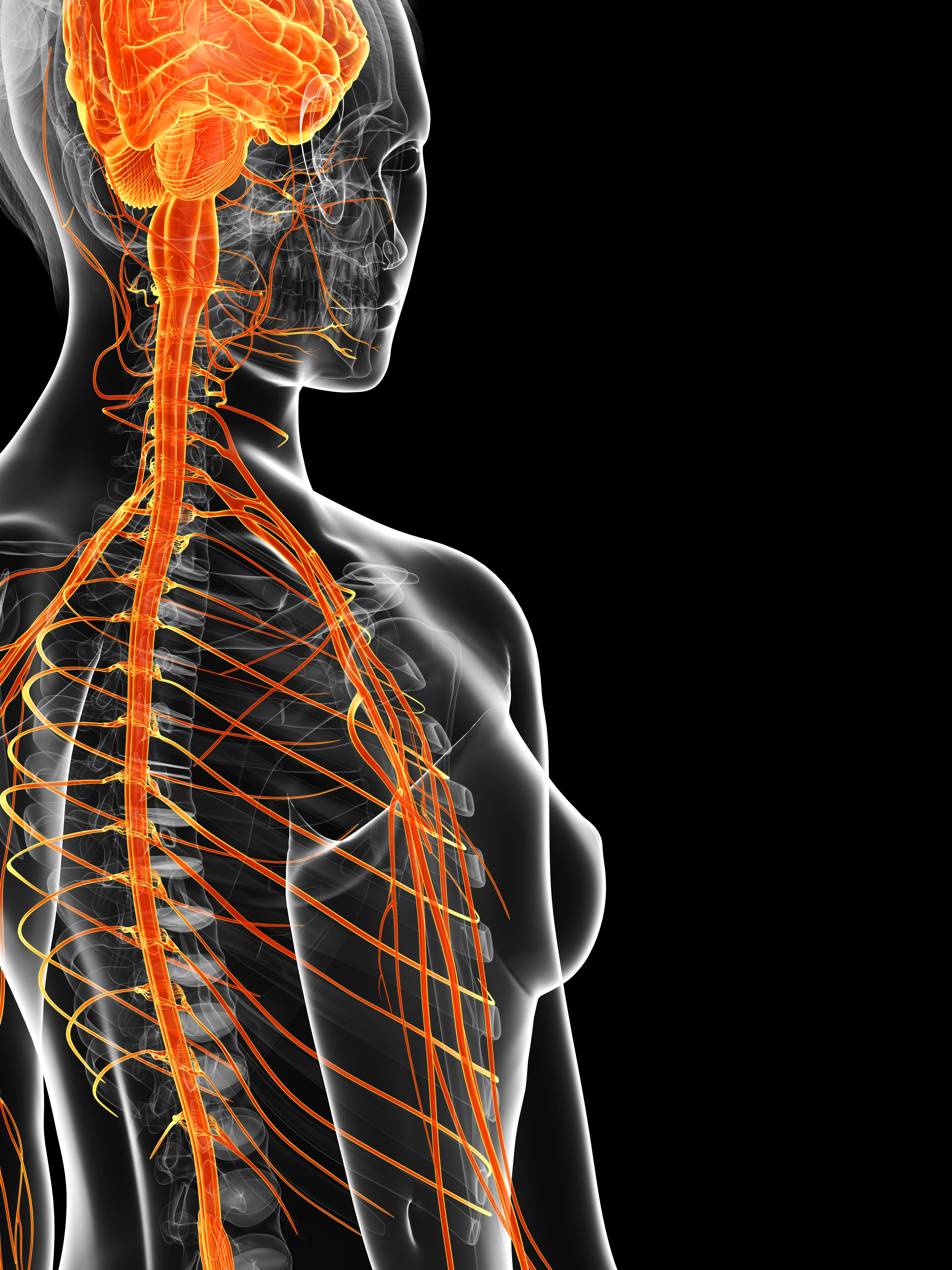 Sistema nervioso y sistema inmune: ¿una relación más estrecha de lo ...