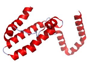 La interleuquina 10 y su función en el organismo
