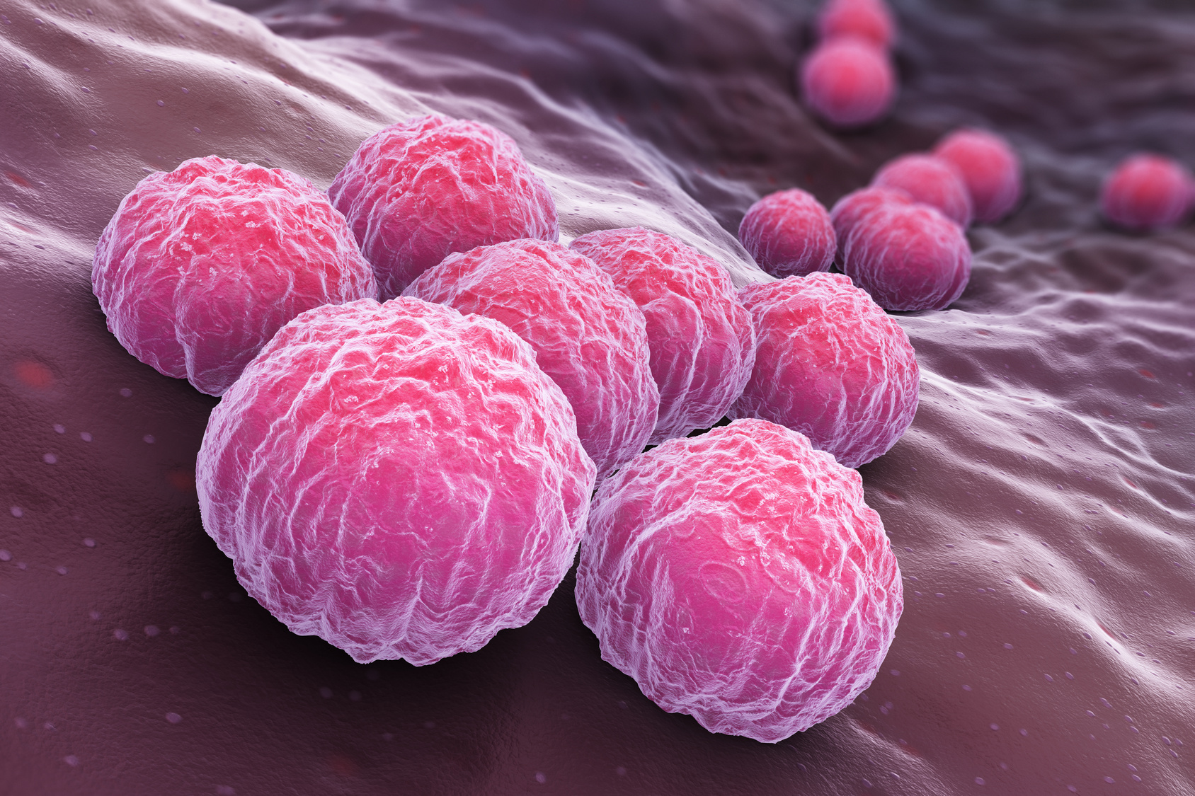 an introduction to the chlamydia a bacterium chlamydia trachomatis Chlamydia: introduction chlamydia infection is one of the most common types of sexually transmitted disease chlamydia infection is the result of a bacterial infection of the genital tract by the bacterium chlamydia trachomatis.