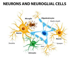 La microglía en el sistema nervioso central